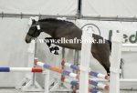 210215227 Hooghei's King (Hogenhof's Alwin x Make My Day)-003.JPG